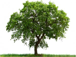 Ağaç ve çimler - Doğayı koruyarak temizlik